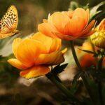 CHAVOUOT: Une fête fleurie