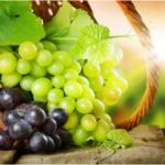 Paracha Ekev – La grappe de raisin